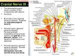 cranial nerve ix glossopharyngeal