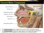 visceral motor component3