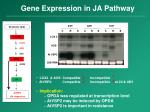 gene expression in ja pathway