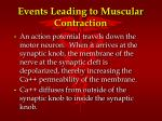 events leading to muscular contraction