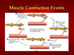muscle contraction events1