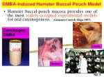 dmba induced hamster buccal pouch model