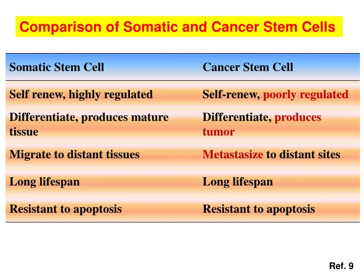 Comparison of Somatic and Cancer Stem Cells