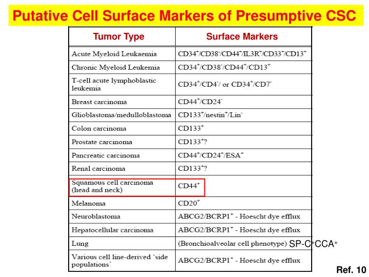 Putative Cell Surface Markers of Presumptive CSC
