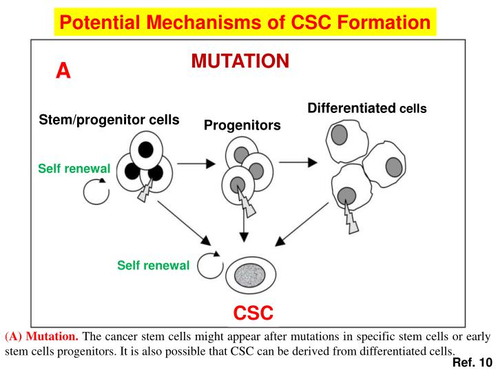 Potential Mechanisms of CSC Formation