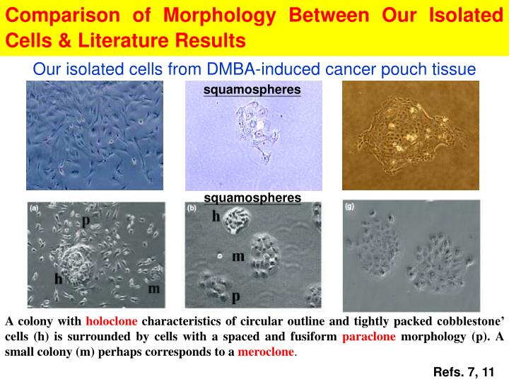 Comparison of Morphology Between Our Isolated Cells & Literature Results