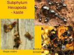 subphylum hexapoda kaste