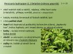 persicaria hydropiper l delarbre rdesno peprn k