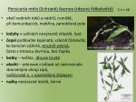 persicaria mitis schrank asenov rdesno dkokv t