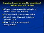 experiments generate model for regulation of virulence genes in v cholerae