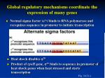 global regulatory mechanisms coordinate the expression of many genes