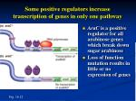 some positive regulators increase transcription of genes in only one pathway