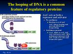 the looping of dna is a common feature of regulatory proteins