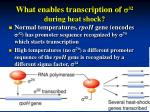 what enables transcription of s 32 during heat shock