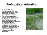 ambrozija u vojvodini