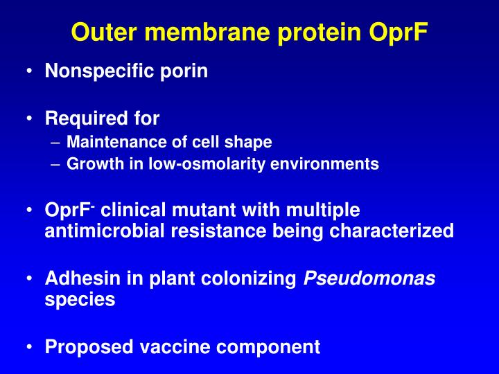 Outer membrane protein OprF