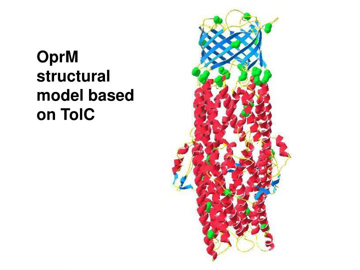 OprM structural model based on TolC