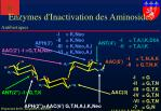 enzymes d inactivation des aminosides