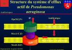 structure du syst me d efflux actif de pseudomonas aeruginosa