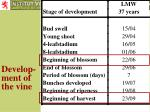 develop ment of the vine
