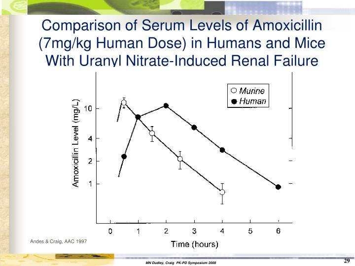 Comparison of Serum Levels of Amoxicillin (7mg/kg Human Dose) in Humans and Mice With Uranyl Nitrate-Induced Renal Failure