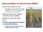 improved maize for african soils imas