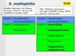 s maltophilia1