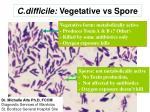 c difficile vegetative vs spore