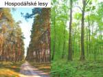 hospod sk lesy