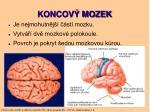 koncov mozek