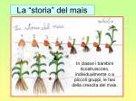 la storia del mais
