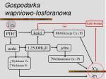 gospodarka wapniowo fosforanowa