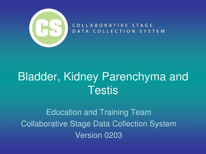 bladder kidney parenchyma and testis n.