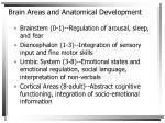 brain areas and anatomical development