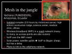 mesh in the jungle