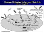 molecular mechanisms for increased fibrinolysis booyse et al 2007