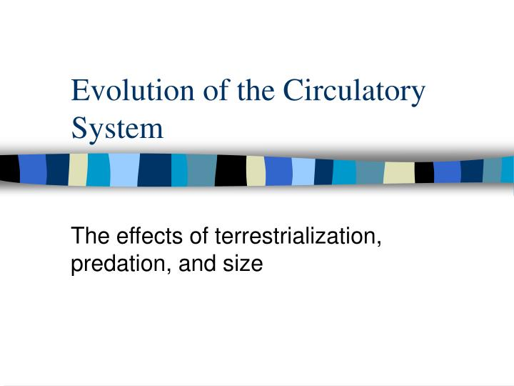 evolution of the circulatory system n.