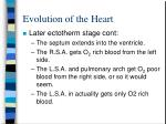 evolution of the heart9