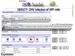 gds177 cmv infection of hff cells