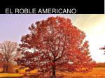 el roble americano