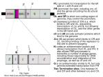 http www micro msb le ac uk 224 phages html lambda