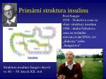prim rn struktura insulinu