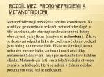 rozd l mezi protonefridiemi a metanefridiemi