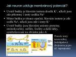 jak neuron udr uje membr nov potenci l1