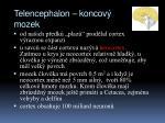 telencephalon koncov mozek2