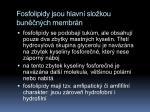 fosfolipidy jsou hlavn slo kou bun n ch membr n