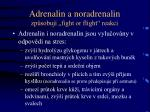 adrenalin a noradrenalin zp sobuj fight or flight reakci