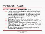 vertebrati agnati2