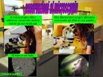 allo stereomicroscopio abbiamo osservato gli afidi di una pianta