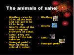 the animals of sahel